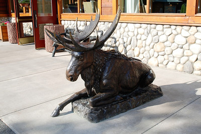 Moose statue at Denali Lodge