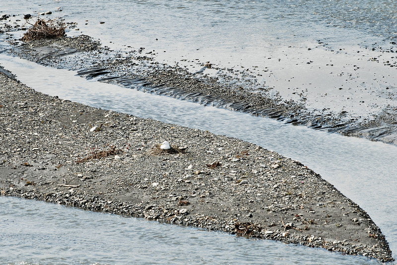 Bird nesting in the middle of the river in Denali National Park