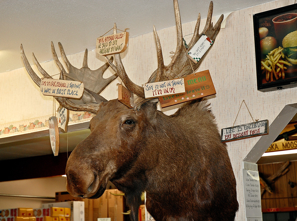 Moose head in a store in Houston, Alaska, where we stopped for ice cream