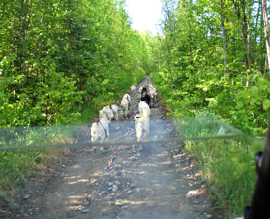"Frank & I in the ""sled"" while the team pulls us through the Talkeetna woods - Sun Dog Kennel/Iditarod team"