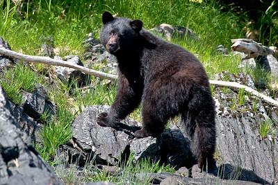 Alaska\Vancover B.C Animals