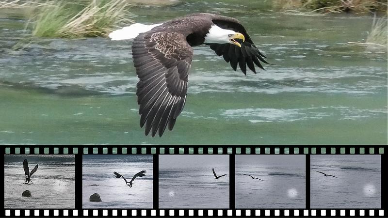 Eagle Drama