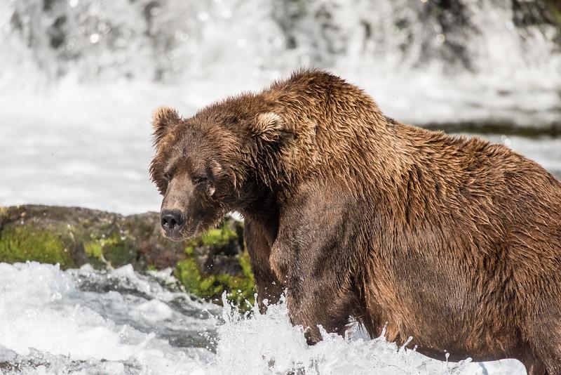 Alaska_15-1779