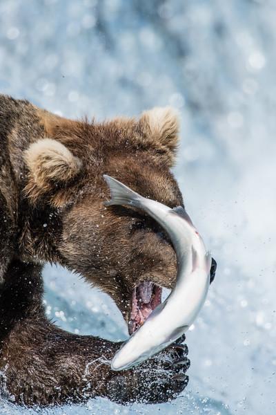 Alaska_15-1524
