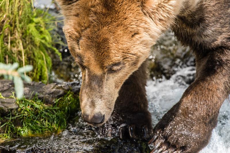 Alaska_15-1433
