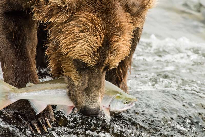 Alaska_15-2134