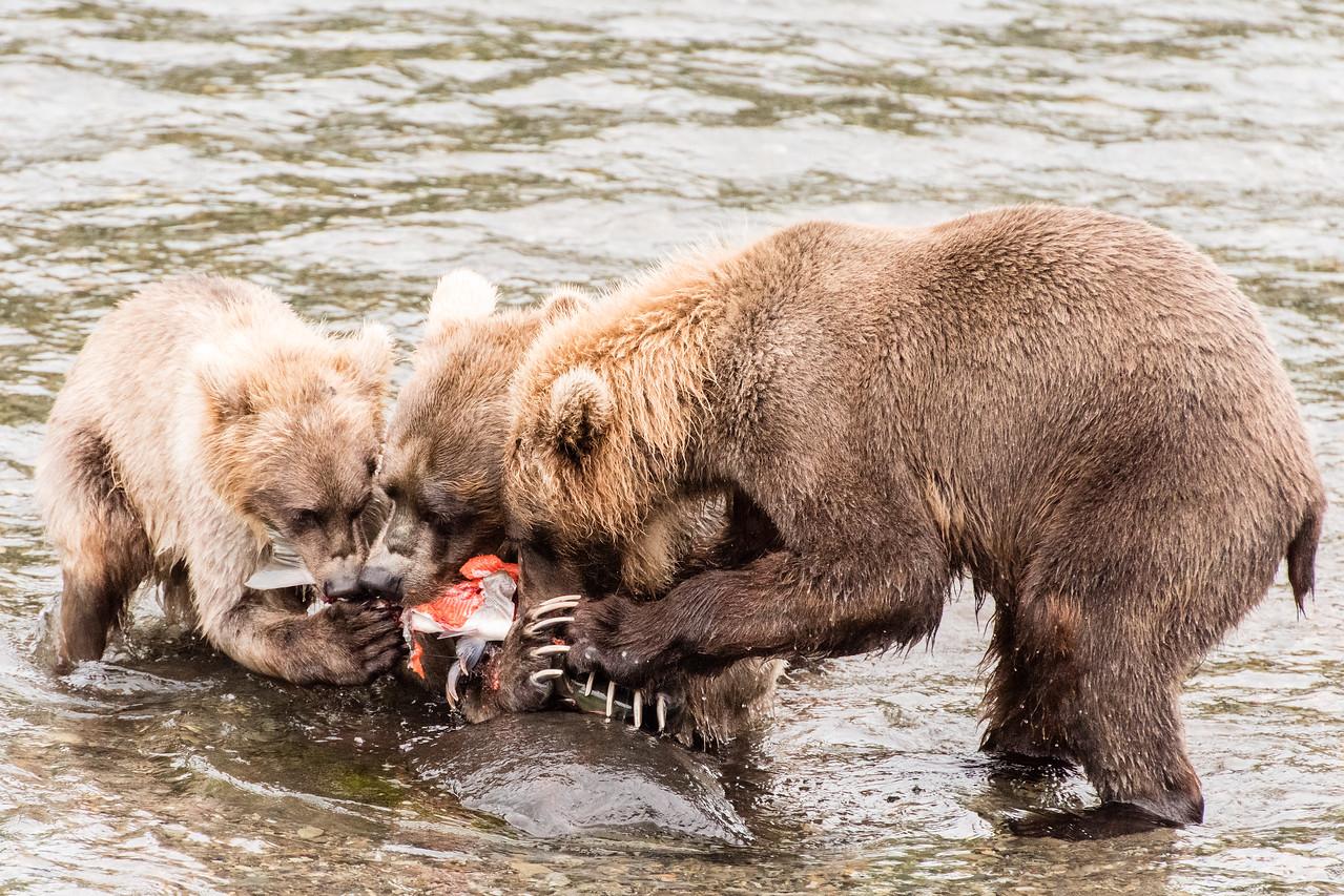Alaska_15-2611