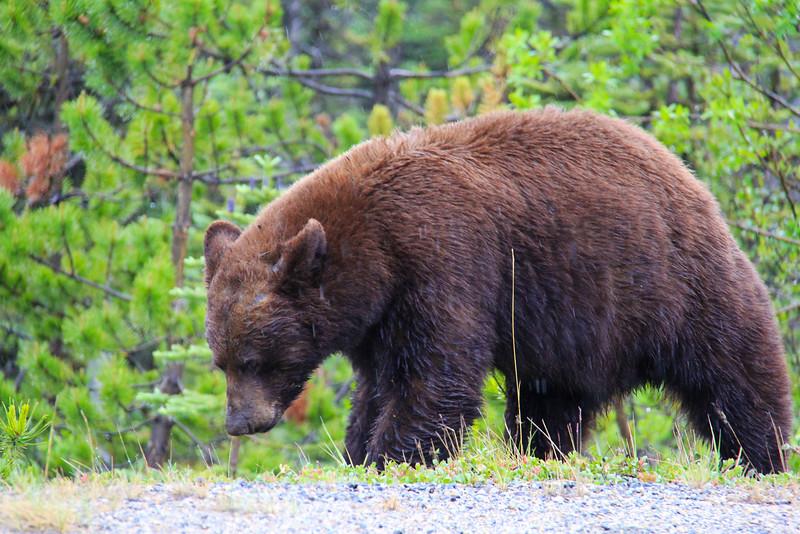 Wildlife - Yukon Territory - Canada