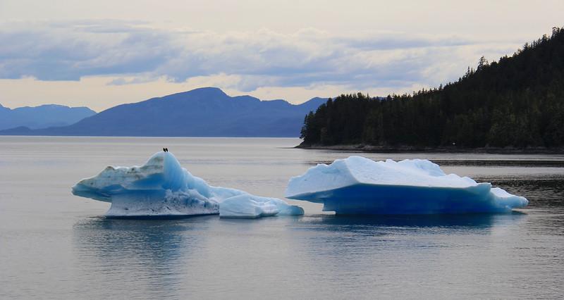 Wildlife - Inside Passage - Alaska