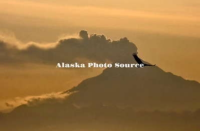 Coastal Volcanoes