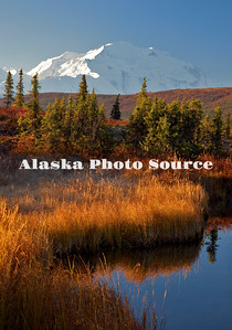 Alaska. Morning reflection of Mt. McKinley in the autumn setting of Wonder Lake, Denali National Park.