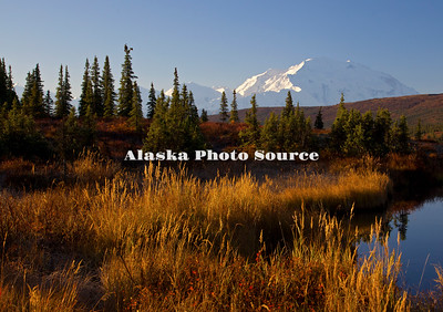 Alaska. In this view above Wonder Lake, the autumn grasses and shrubs add a colorful foreground to Mt. McKinley basked in morning light, Denali National Park.