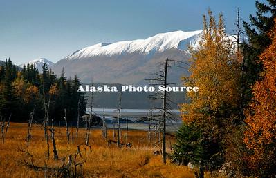 Alaska. Autumn scene along Turnagain Arm, Cook Inlet.