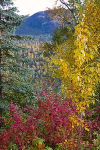 Alaska Autumn Colors_R163A5352
