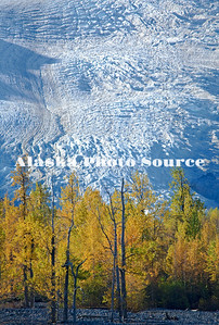 Alaska. Autumn color at Exit Glacier, Kenai Fjords National Park.