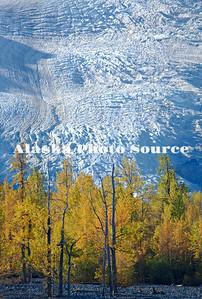 Alaska. Autumn color at Exit Glacier, Kenai Fjords National Park.