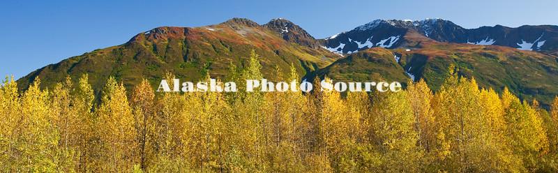 Alaska. Autmn Birch and tundra panorama, Chugach National Forest.