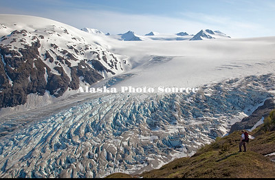 Alaska. Hiker enjoys view of Exit Glacier and Harding Ice Field, Kenai Fjords National Park, near Seward.