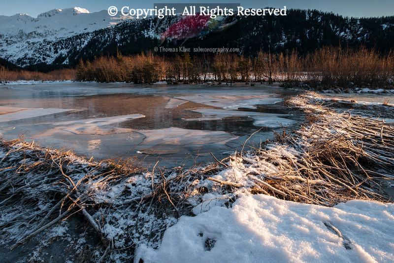Beaver Dam in winter