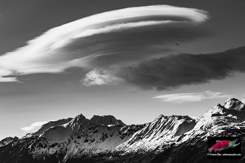 Lenticular cloud over Heney Range with soaring bald eagle