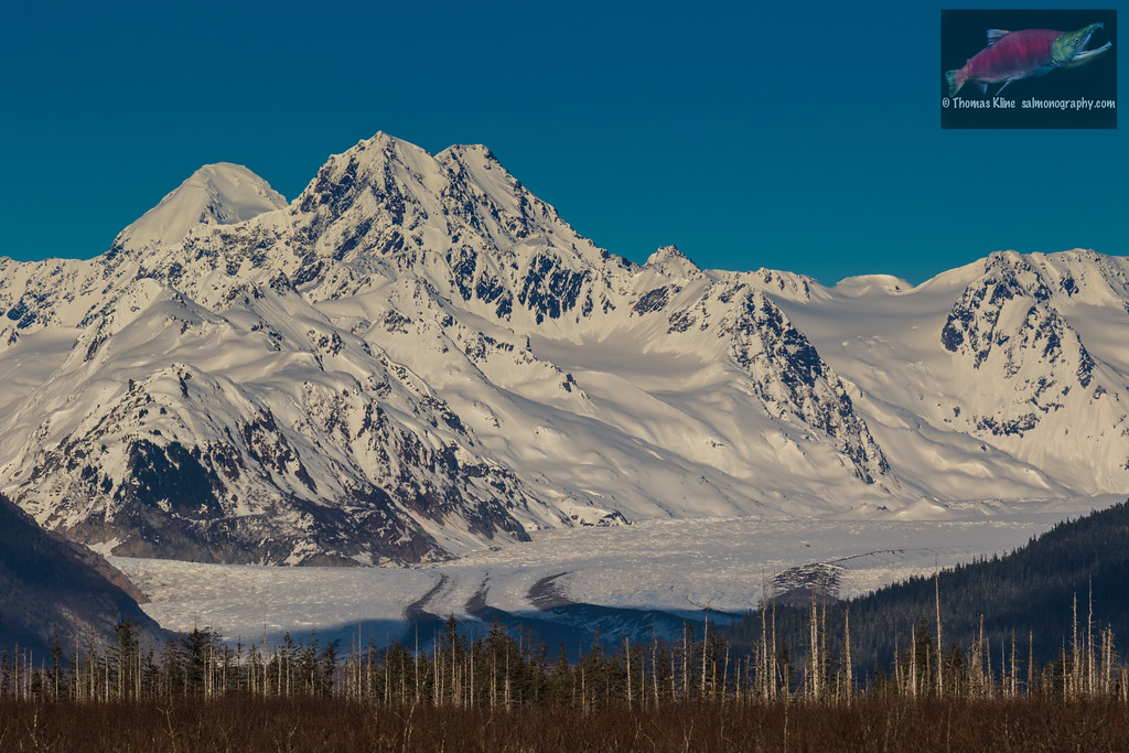 The Scott Glacier viewed from the Copper River Delta