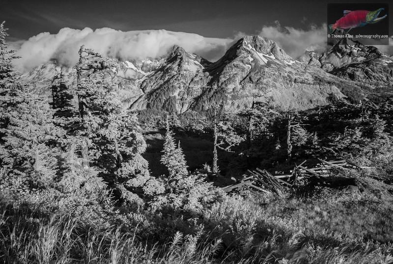 Heney Ridge by infrared