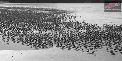 Shorebirdscape