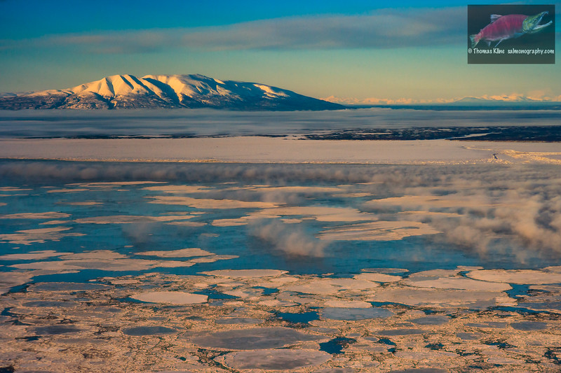 Pancake ice in Cook Inlet