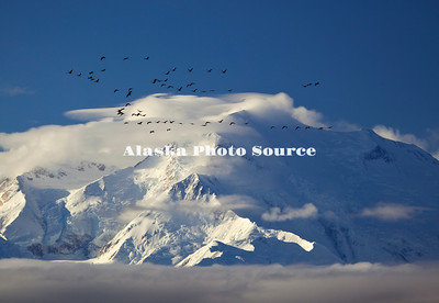 Alaska. Mt. McKinley weather highlighted by sandhill cranes flying by, Denali National Park.