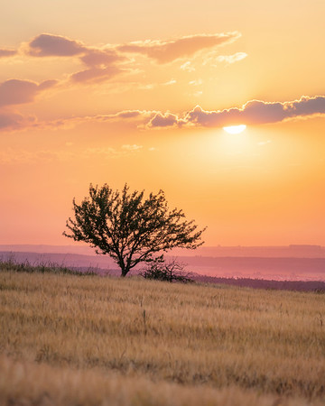 Lone tree at sunset with vibrant colors near Kirchheim Teck