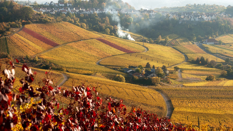 Vineyards in fall colors. Herbstfarben in den Weinbergen am Württemberg
