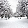 Snow covered benches in Washington Park, Albany, NY