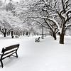Park after snowstorm, Albany, NY