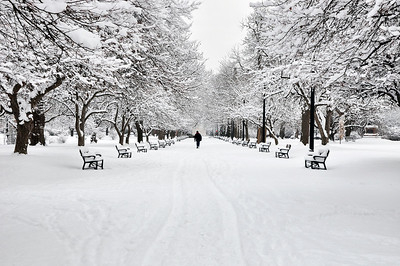 Walking in Snow, Albany, NY