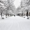 Walking in Snow, Albany, NY