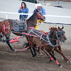 Calgary Stampede Chuckwagon Races