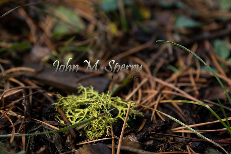 Moss and Pine
