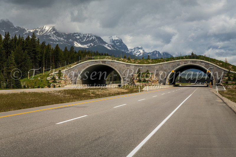 A wildlife overpass across the Trans Canada highway in Banff National Park, Alberta, Canada.