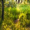 Summer sun  in Fish Creek Provincial Park