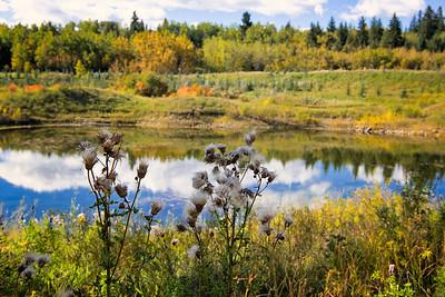 The Beaver Pond - Shaw Meadows