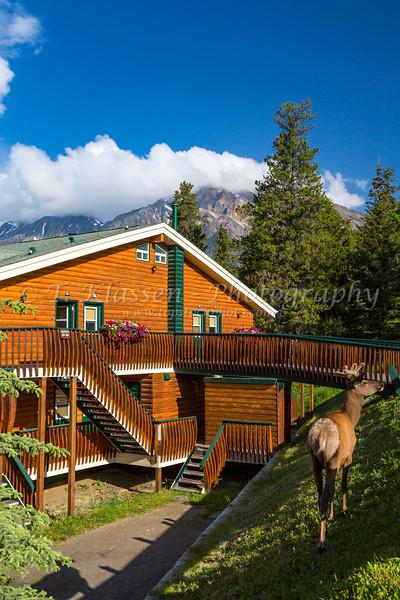 Pyramid Lake Resort lodging with an elk at Pyramid Lake, Jasper National Park, Alberta, Canada.