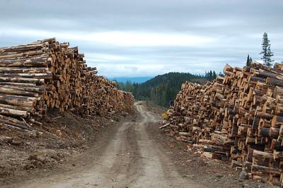 K-logging-062813-trim