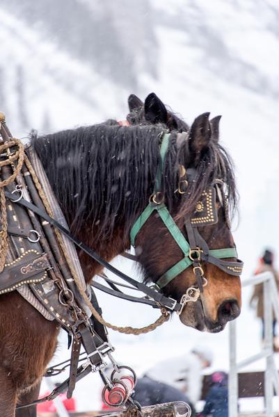 Working Horses, Lake Louise