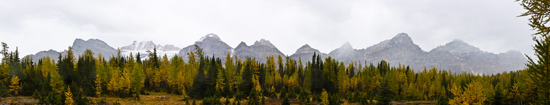 Larch Valley View