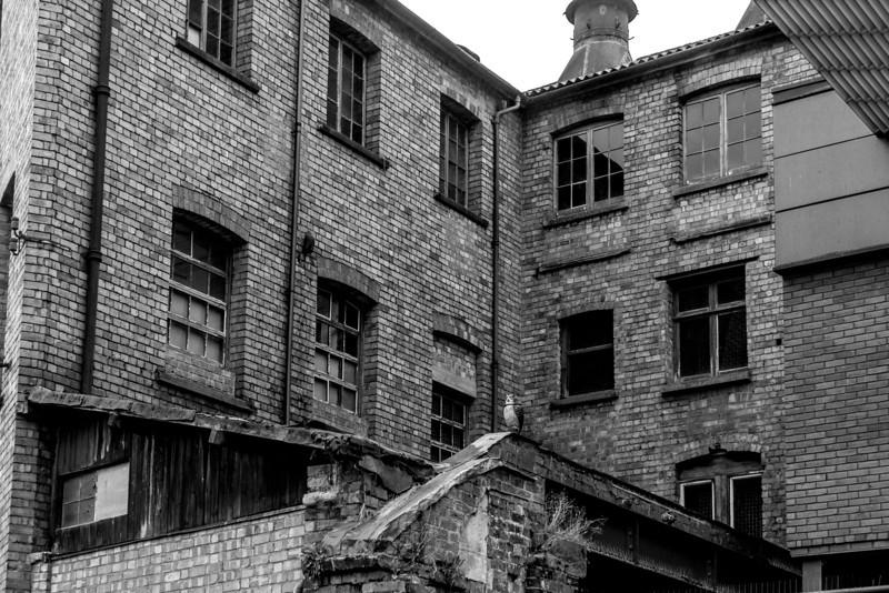 Windows, Albion Steam Brewey, Northampton