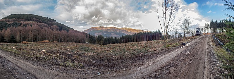 Thu 1st Feb : Newly Felled Area Reveals New View Of Skiddaw