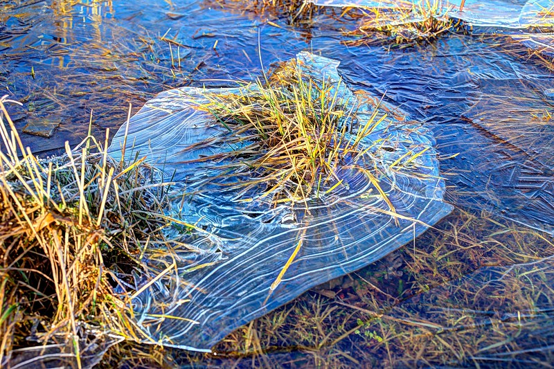 Sun 7th Jan : Circular Reeds In Ice
