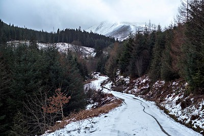 Wed 17th Jan : Forest Road : Grisedale Pike