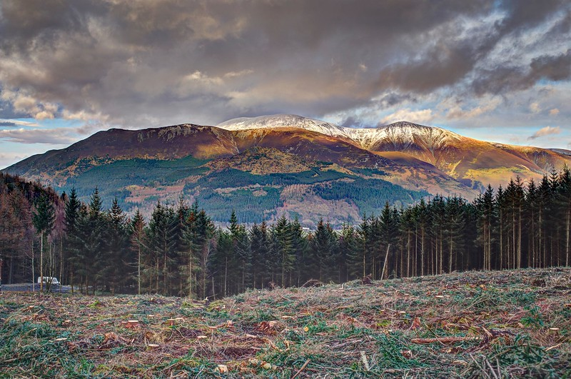 Thu 1st Feb : Tree Felling : Skiddaw