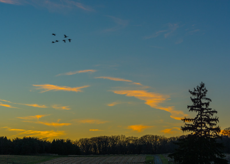 Sunset At The Metro Parks Farm